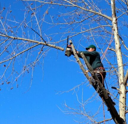Contact Us-Winter Haven FL Tree Trimming and Stump Grinding Services-We Offer Tree Trimming Services, Tree Removal, Tree Pruning, Tree Cutting, Residential and Commercial Tree Trimming Services, Storm Damage, Emergency Tree Removal, Land Clearing, Tree Companies, Tree Care Service, Stump Grinding, and we're the Best Tree Trimming Company Near You Guaranteed!