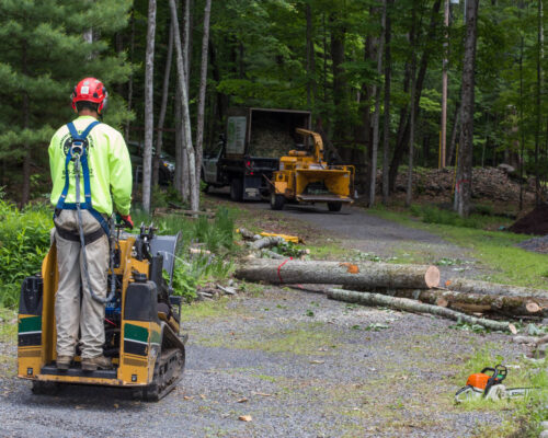 Emergency Tree Removal-Winter Haven FL Tree Trimming and Stump Grinding Services-We Offer Tree Trimming Services, Tree Removal, Tree Pruning, Tree Cutting, Residential and Commercial Tree Trimming Services, Storm Damage, Emergency Tree Removal, Land Clearing, Tree Companies, Tree Care Service, Stump Grinding, and we're the Best Tree Trimming Company Near You Guaranteed!
