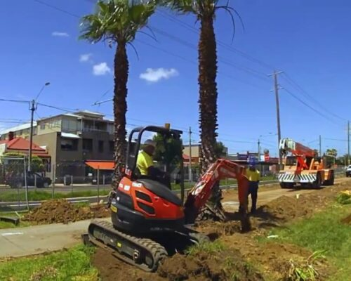 Palm Tree Removal-Winter Haven FL Tree Trimming and Stump Grinding Services-We Offer Tree Trimming Services, Tree Removal, Tree Pruning, Tree Cutting, Residential and Commercial Tree Trimming Services, Storm Damage, Emergency Tree Removal, Land Clearing, Tree Companies, Tree Care Service, Stump Grinding, and we're the Best Tree Trimming Company Near You Guaranteed!