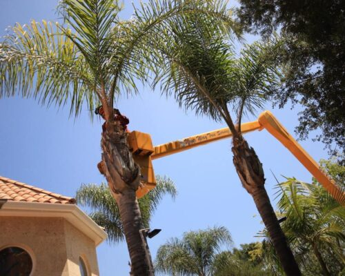 Palm Tree Trimming-Winter Haven FL Tree Trimming and Stump Grinding Services-We Offer Tree Trimming Services, Tree Removal, Tree Pruning, Tree Cutting, Residential and Commercial Tree Trimming Services, Storm Damage, Emergency Tree Removal, Land Clearing, Tree Companies, Tree Care Service, Stump Grinding, and we're the Best Tree Trimming Company Near You Guaranteed!