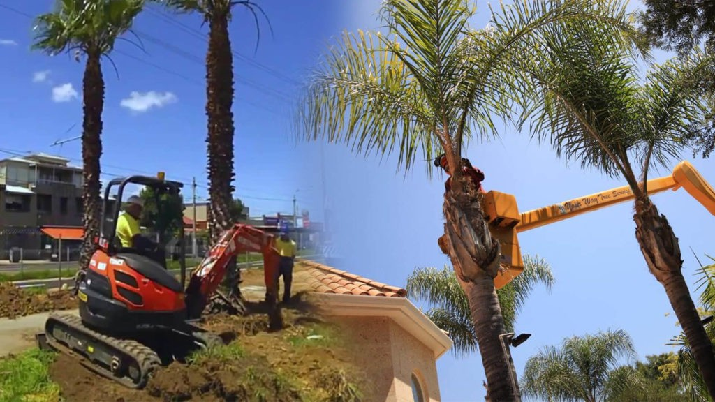 Palm tree trimming & palm tree removal-Winter Haven FL Tree Trimming and Stump Grinding Services-We Offer Tree Trimming Services, Tree Removal, Tree Pruning, Tree Cutting, Residential and Commercial Tree Trimming Services, Storm Damage, Emergency Tree Removal, Land Clearing, Tree Companies, Tree Care Service, Stump Grinding, and we're the Best Tree Trimming Company Near You Guaranteed!