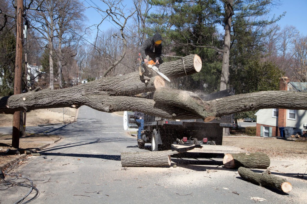 Residential Tree Services-Winter Haven FL Tree Trimming and Stump Grinding Services-We Offer Tree Trimming Services, Tree Removal, Tree Pruning, Tree Cutting, Residential and Commercial Tree Trimming Services, Storm Damage, Emergency Tree Removal, Land Clearing, Tree Companies, Tree Care Service, Stump Grinding, and we're the Best Tree Trimming Company Near You Guaranteed!