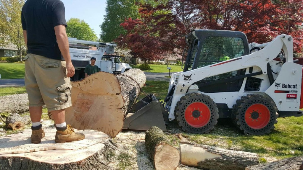 Services-Winter Haven FL Tree Trimming and Stump Grinding Services-We Offer Tree Trimming Services, Tree Removal, Tree Pruning, Tree Cutting, Residential and Commercial Tree Trimming Services, Storm Damage, Emergency Tree Removal, Land Clearing, Tree Companies, Tree Care Service, Stump Grinding, and we're the Best Tree Trimming Company Near You Guaranteed!