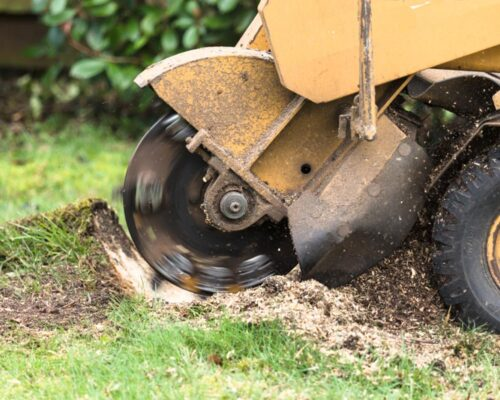 Stump Grinding-Winter Haven FL Tree Trimming and Stump Grinding Services-We Offer Tree Trimming Services, Tree Removal, Tree Pruning, Tree Cutting, Residential and Commercial Tree Trimming Services, Storm Damage, Emergency Tree Removal, Land Clearing, Tree Companies, Tree Care Service, Stump Grinding, and we're the Best Tree Trimming Company Near You Guaranteed!