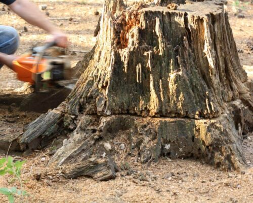Stump Removal-Winter Haven FL Tree Trimming and Stump Grinding Services-We Offer Tree Trimming Services, Tree Removal, Tree Pruning, Tree Cutting, Residential and Commercial Tree Trimming Services, Storm Damage, Emergency Tree Removal, Land Clearing, Tree Companies, Tree Care Service, Stump Grinding, and we're the Best Tree Trimming Company Near You Guaranteed!