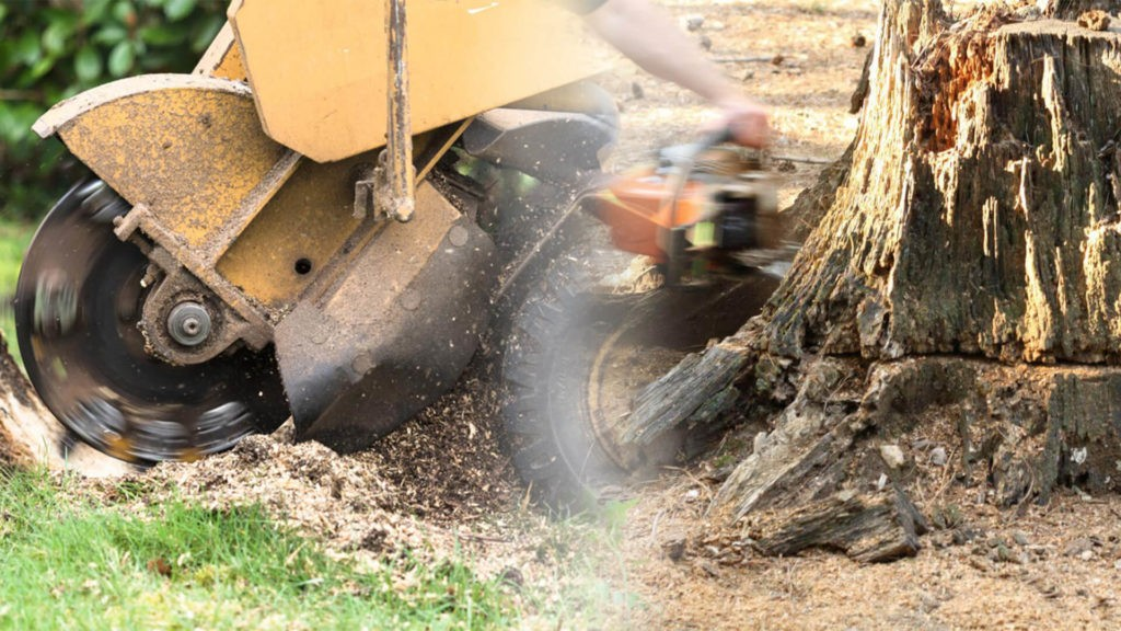 Stump grinding & removal-Winter Haven FL Tree Trimming and Stump Grinding Services-We Offer Tree Trimming Services, Tree Removal, Tree Pruning, Tree Cutting, Residential and Commercial Tree Trimming Services, Storm Damage, Emergency Tree Removal, Land Clearing, Tree Companies, Tree Care Service, Stump Grinding, and we're the Best Tree Trimming Company Near You Guaranteed!