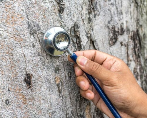 Tree Assessments-Winter Haven FL Tree Trimming and Stump Grinding Services-We Offer Tree Trimming Services, Tree Removal, Tree Pruning, Tree Cutting, Residential and Commercial Tree Trimming Services, Storm Damage, Emergency Tree Removal, Land Clearing, Tree Companies, Tree Care Service, Stump Grinding, and we're the Best Tree Trimming Company Near You Guaranteed!
