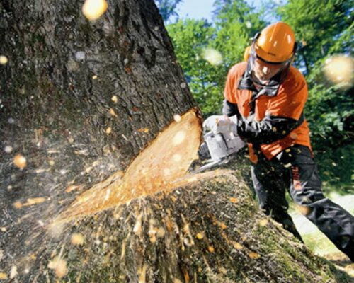 Tree Cutting-Winter Haven FL Tree Trimming and Stump Grinding Services-We Offer Tree Trimming Services, Tree Removal, Tree Pruning, Tree Cutting, Residential and Commercial Tree Trimming Services, Storm Damage, Emergency Tree Removal, Land Clearing, Tree Companies, Tree Care Service, Stump Grinding, and we're the Best Tree Trimming Company Near You Guaranteed!