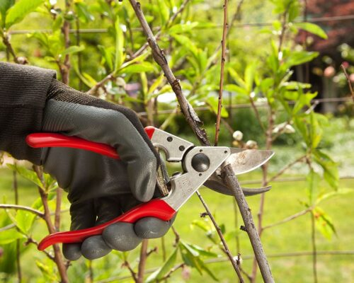 Tree Pruning-Winter Haven FL Tree Trimming and Stump Grinding Services-We Offer Tree Trimming Services, Tree Removal, Tree Pruning, Tree Cutting, Residential and Commercial Tree Trimming Services, Storm Damage, Emergency Tree Removal, Land Clearing, Tree Companies, Tree Care Service, Stump Grinding, and we're the Best Tree Trimming Company Near You Guaranteed!