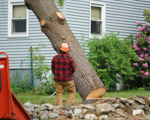 Tree Removal-Winter Haven FL Tree Trimming and Stump Grinding Services-We Offer Tree Trimming Services, Tree Removal, Tree Pruning, Tree Cutting, Residential and Commercial Tree Trimming Services, Storm Damage, Emergency Tree Removal, Land Clearing, Tree Companies, Tree Care Service, Stump Grinding, and we're the Best Tree Trimming Company Near You Guaranteed!