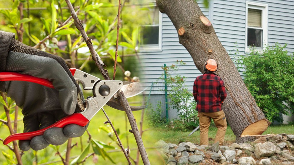 Tree pruning & tree removal-Winter Haven FL Tree Trimming and Stump Grinding Services-We Offer Tree Trimming Services, Tree Removal, Tree Pruning, Tree Cutting, Residential and Commercial Tree Trimming Services, Storm Damage, Emergency Tree Removal, Land Clearing, Tree Companies, Tree Care Service, Stump Grinding, and we're the Best Tree Trimming Company Near You Guaranteed!