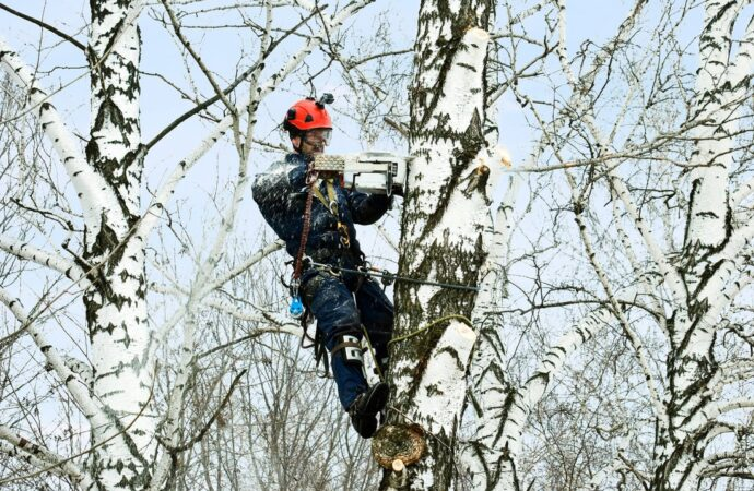 Winter Haven FL Tree Trimming and Stump Grinding Services Home Page Image-We Offer Tree Trimming Services, Tree Removal, Tree Pruning, Tree Cutting, Residential and Commercial Tree Trimming Services, Storm Damage, Emergency Tree Removal, Land Clearing, Tree Companies, Tree Care Service, Stump Grinding, and we're the Best Tree Trimming Company Near You Guaranteed!